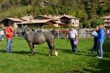 III Concurs Comarcal del Cavall Pirinenc