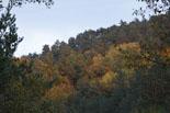Esclat de la tardor al Ripollès Colors de tardor a la muntanya de Sant Antoni de Ripoll (19 d'octubre). Foto: Arnau Urgell