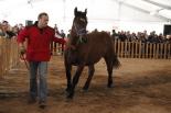 Fira Comarcal del Cavall Pirinenc de Ripoll