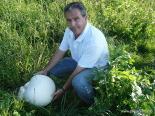 Resum 2011 Un pet de llop de grans dimensions a Campelles. Foto: Lluís Rodríguez