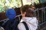 Sant Lluc 2010: Fira Ramadera