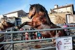 Resum de l'any 2016 a la Garrotxa <p>Sant Lluc aplega els animals al costat de la plaça de braus.</p>