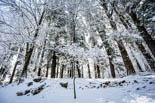 Paisatges de neu a la Vall d'en Bas