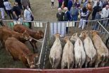 Sant Lluc 2013: Fira ramadera de Sant Lluc a Olot