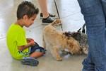 Festa Major de Terrassa 2014 per als gossos