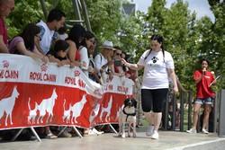 Festa dels animals per la Festa Major de Terrassa 2016