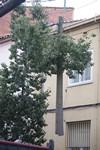 Treballs als arbres de la carretera Montcada de Terrassa