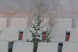 La degradació de l'Estadi Olímpic de Terrassa