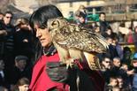 Mercat Medieval 2011: espectacle de falconeria