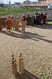 Mercat Medieval 2012: les escoles visiten el Mercadal V.O.