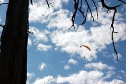 Pi de les Tres Branques 2014 Els parapents gravant des de l'aire