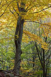 Els colors de la tardor Foto: Víctor Castelo