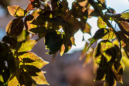 Els colors de la tardor Foto: José M. Gutiérrez