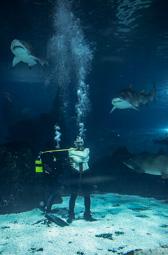 Les millors fotos de la setmana de Nació Digital   El mentalista sabadellenc David Baró se submergeix al tanc dels taurons de l'Aquàrium de Barcelona, lligat amb una camisa de força i un cinturó amb pesos. </br> Foto: Juanma Peláez