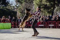 Les millors fotos de la setmana de Nació Digital <a href='http://www.naciodigital.cat/latorredelpalau/noticia/47864/fotos/ensinistrament/gossos/al/parc/sant/jordi/terrassa'>Jornada d'ensinistrament de gossos al Parc de Sant Jordi de Terrassa</a>. </br> Foto: Marta Maseras