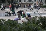 Els coloms de plaça Catalunya