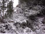 Temporal de fred i neu a Catalunya 14.12.2009 15.19 - Els boscos de Tivissa s'han cobert de neu. Foto: Cristina Fornós/ACN