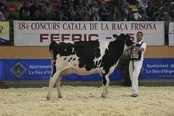 Concurs Catala de Raça Frisona a La Seu d'Urgell