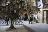 13D a Osona El «Sí» també és present a l'olivera de la Pau de la plaça del Pes de Vic. Foto: Adrià Costa