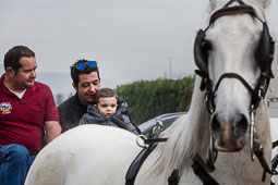 Festa Major de Gurb 2014: carros i cavalls
