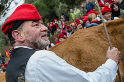 Festa del Pi de Centelles, 2015