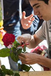Diada de Sant Jordi a Manlleu, 2014