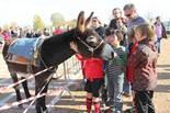 Festa Major de Gurb 2012: la Tifarada d'or