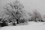 La nevada vista pels lectors Tavèrnoles. Foto: Domènec Llop