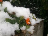 La nevada vista pels lectors Vic. Foto: Marc Peiron