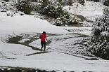 Enfarinada del 6 d'abril a Osona La nevada, al Cabrerès. Foto: Domènec Llop