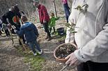Setmana Ambiental de Manlleu: plantada d'arbres a la platja del Dolcet